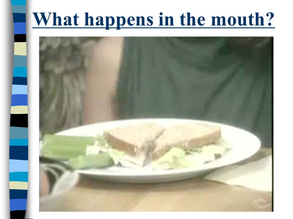 What happens in the mouth