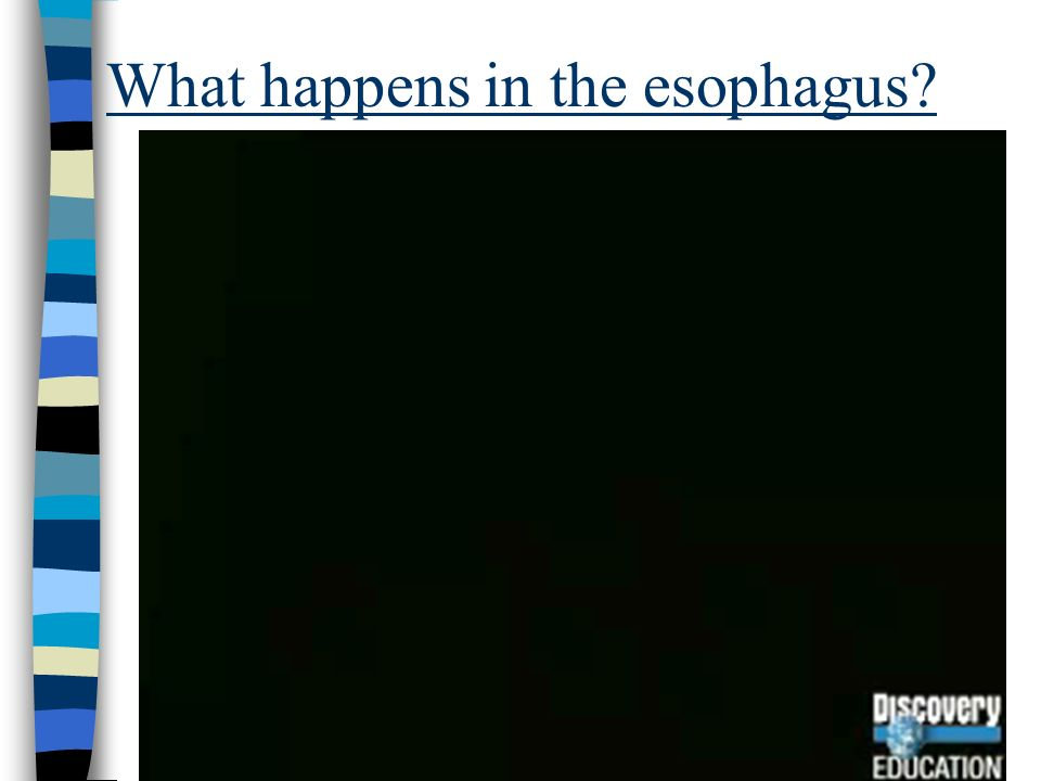 What happens in the esophagus