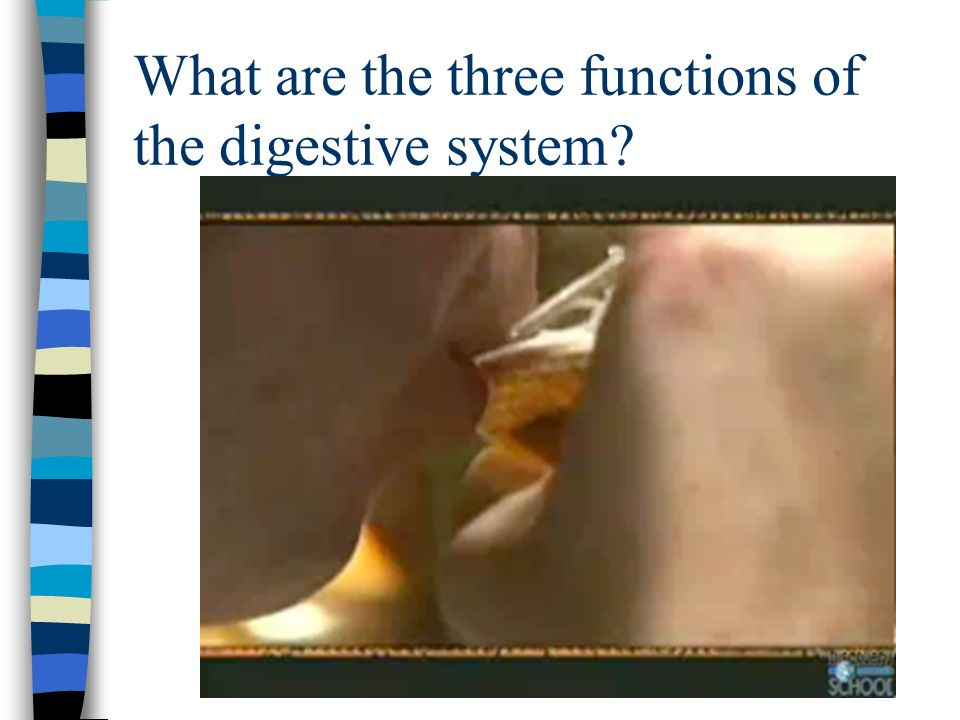 What are the three functions of the digestive system