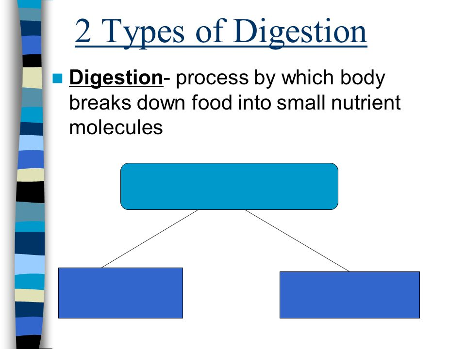 2 Types of Digestion Digestion- process by which body breaks down food into small nutrient molecules
