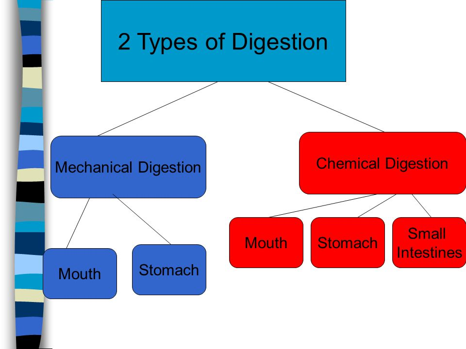 2 Types of Digestion Mechanical Digestion Chemical Digestion Mouth Stomach Small Intestines StomachMouth