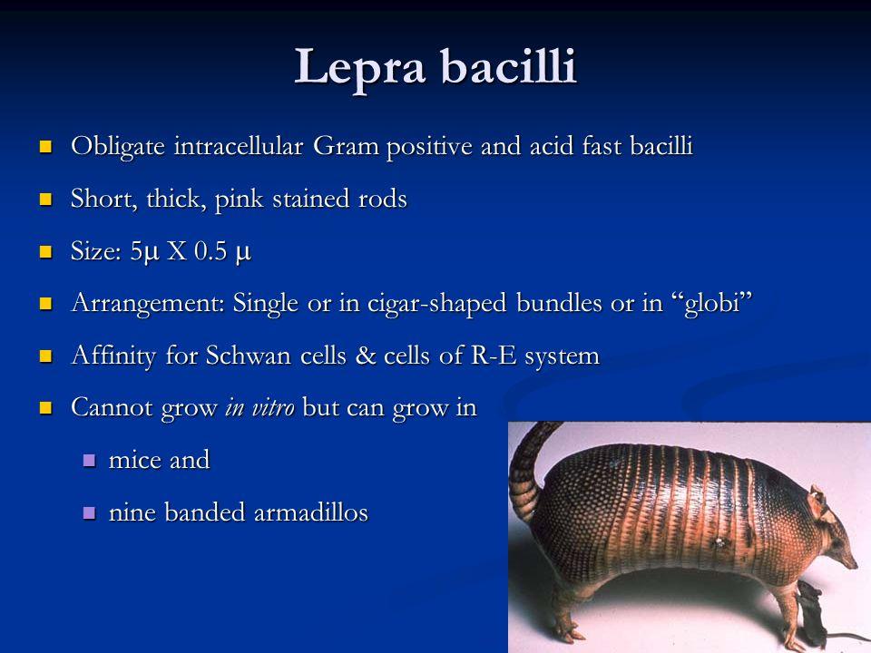 LEPROSY Leprosy I Introduction Epidemiology