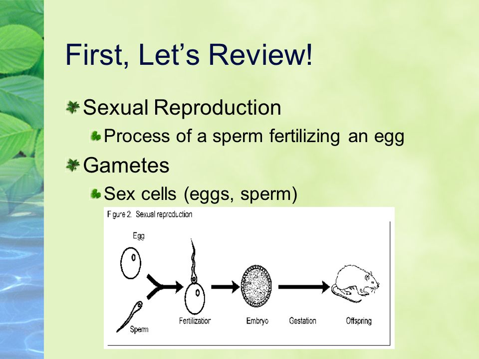 diagram-of-sperm-fertilizing-an-egg