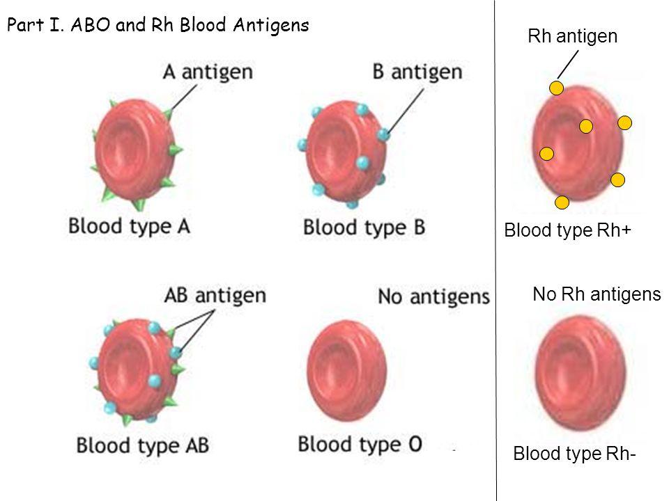 Image result for ब्लड एंटीजन