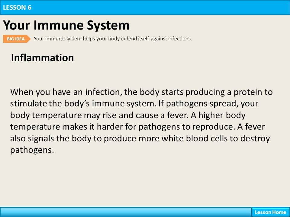 Inflammation LESSON 6 Your Immune System BIG IDEA Your immune system helps your body defend itself against infections.