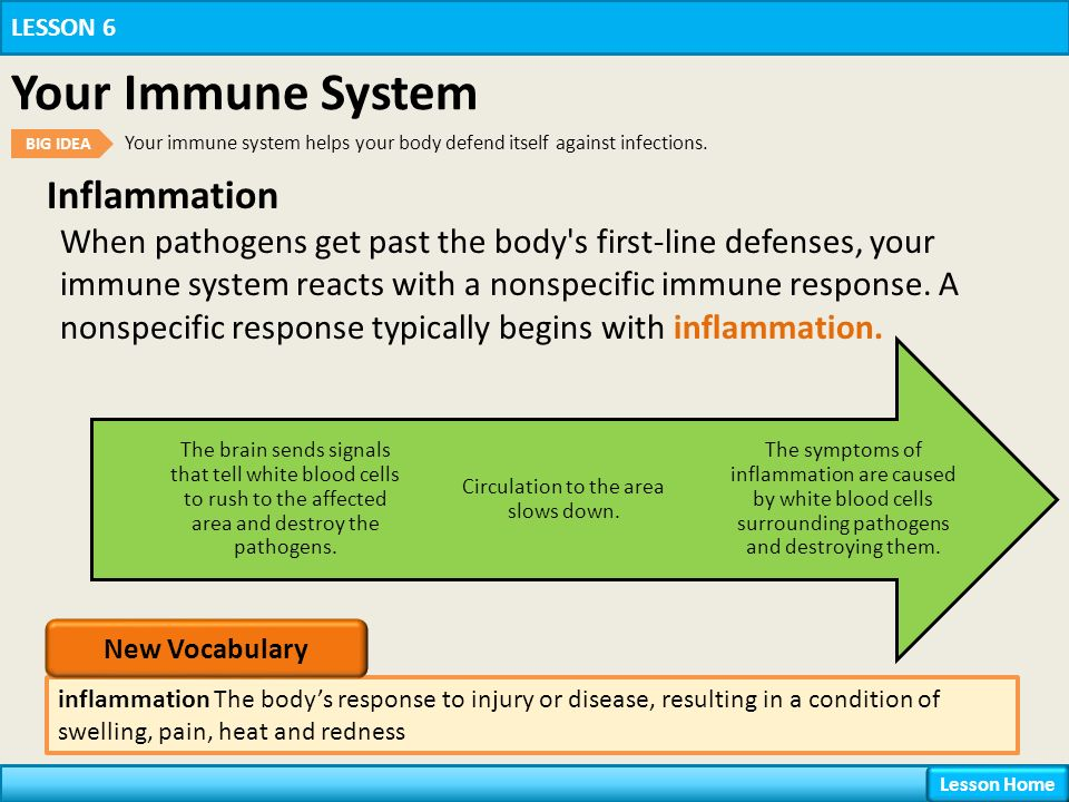 Inflammation inflammation The body's response to injury or disease, resulting in a condition of swelling, pain, heat and redness LESSON 6 Your Immune System BIG IDEA Your immune system helps your body defend itself against infections.