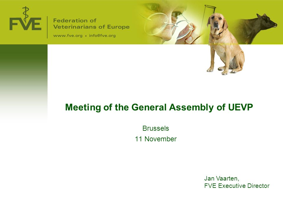 Meeting of the General Assembly of UEVP Brussels 11 November Jan Vaarten, FVE Executive Director