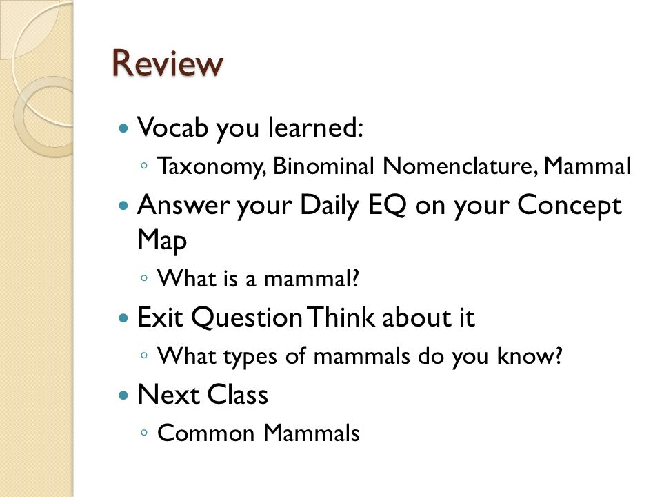 Taxonomy Concept Map Answers.Mammals What Are They Get Ready To Set Up Your Concept Map Ppt