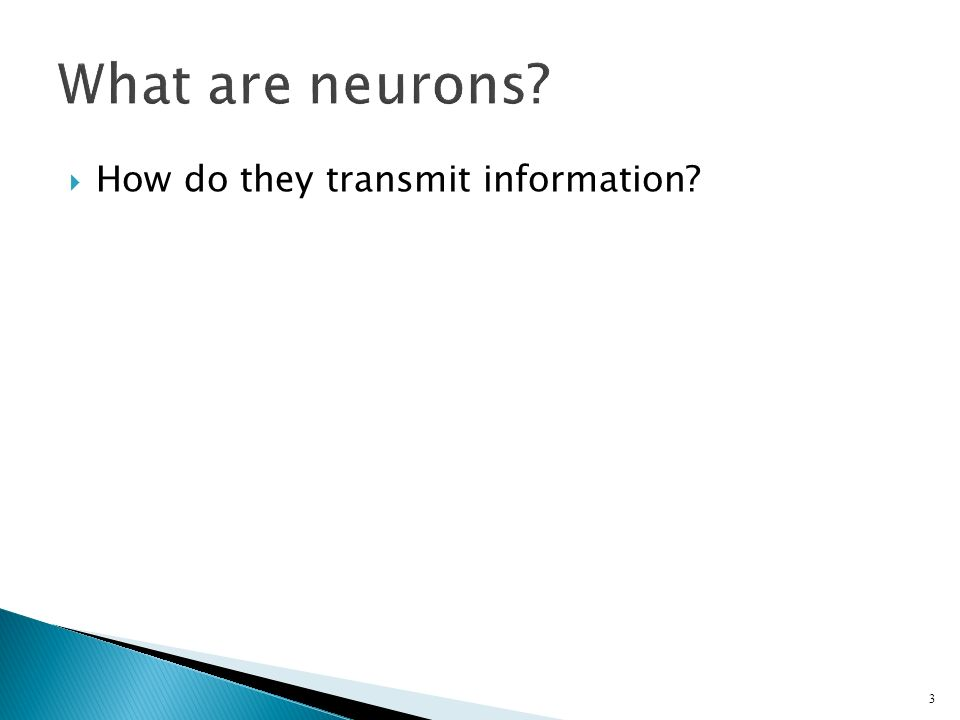  How do they transmit information 3 What are neurons