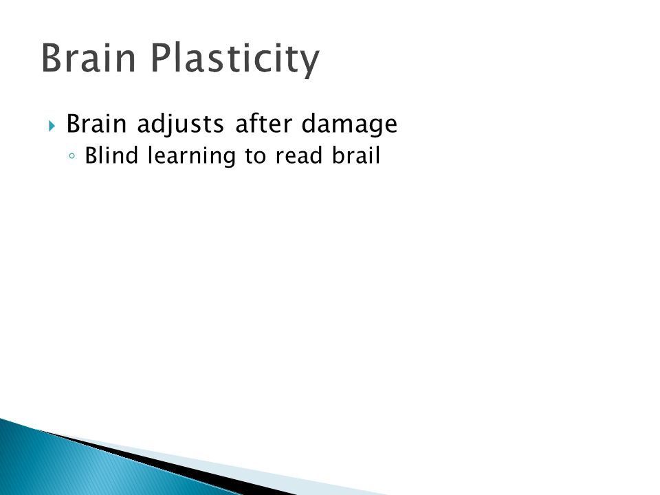Brain Plasticity  Brain adjusts after damage ◦ Blind learning to read brail