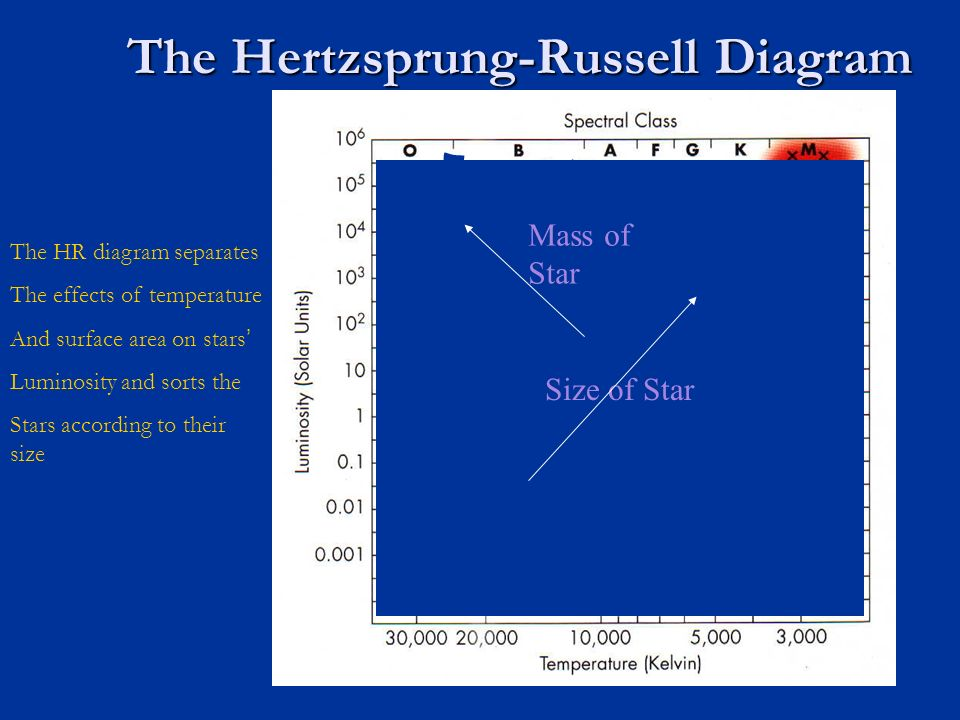 The hertzsprung russell diagram the hr diagram separates the effects 7 the hertzsprung russell diagram size of star mass of star the hr diagram separates the effects of temperature and surface area on stars luminosity and ccuart Gallery