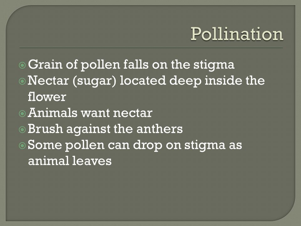  Grain of pollen falls on the stigma  Nectar (sugar) located deep inside the flower  Animals want nectar  Brush against the anthers  Some pollen can drop on stigma as animal leaves
