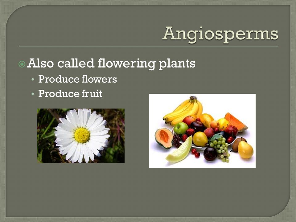 Also called flowering plants Produce flowers Produce fruit