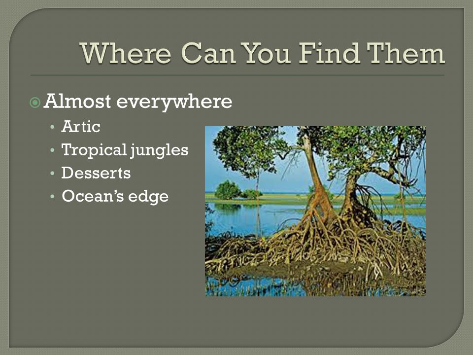 Almost everywhere Artic Tropical jungles Desserts Ocean's edge