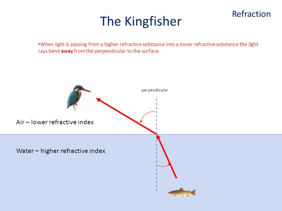 Air – lower refractive index Water – higher refractive index The Kingfisher When light is passing from a higher refractive substance into a lower refractive substance the light rays bend away from the perpendicular to the surface.