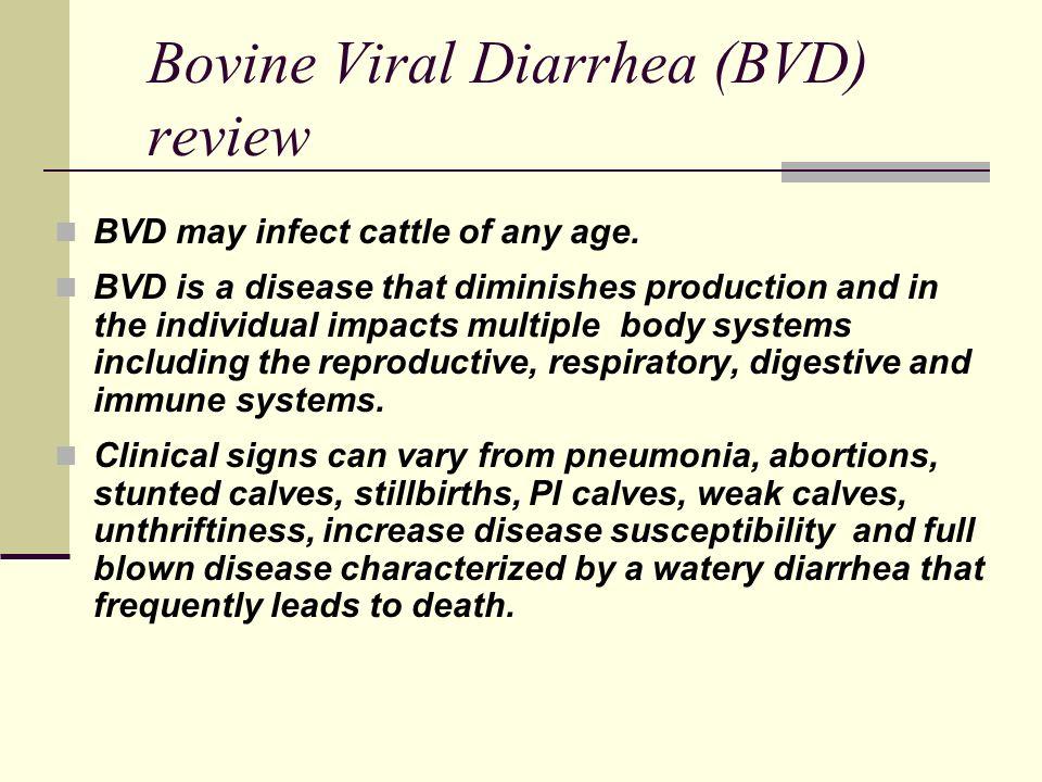Dr. Robert stout bovine virus diarrhea-persistent infection managem….