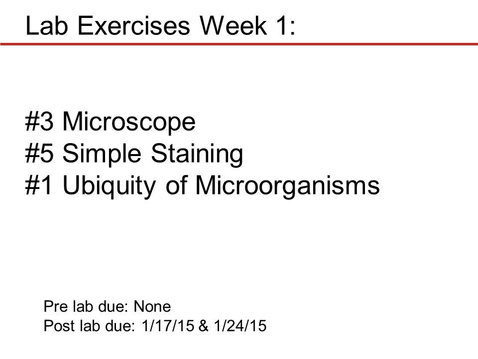 ubiquity of bacteria lab