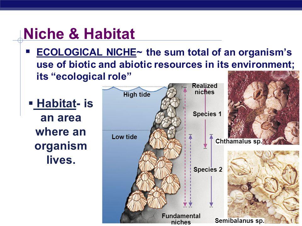 Ap biology ecology essays | Essay Service pzpapergabz paperfolder info