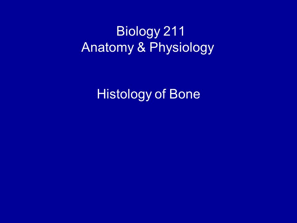 Biology 211 Anatomy & Physiology I Histology of Bone. - ppt download