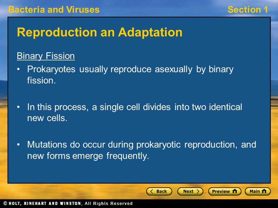 Prokaryotes reproduce asexually through the process of simple