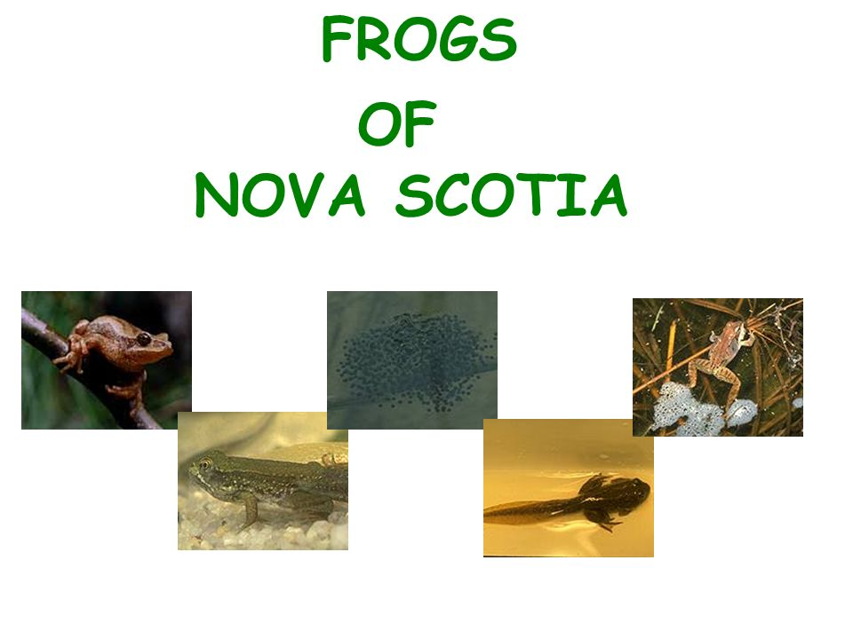 FROGS OF NOVA SCOTIA  Eight kinds of frogs Live in Nova
