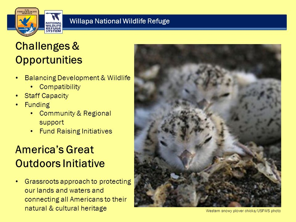 Willapa National Wildlife Refuge Challenges & Opportunities Balancing Development & Wildlife Compatibility Staff Capacity Funding Community & Regional support Fund Raising Initiatives America's Great Outdoors Initiative Grassroots approach to protecting our lands and waters and connecting all Americans to their natural & cultural heritage Western snowy plover chicks/USFWS photo