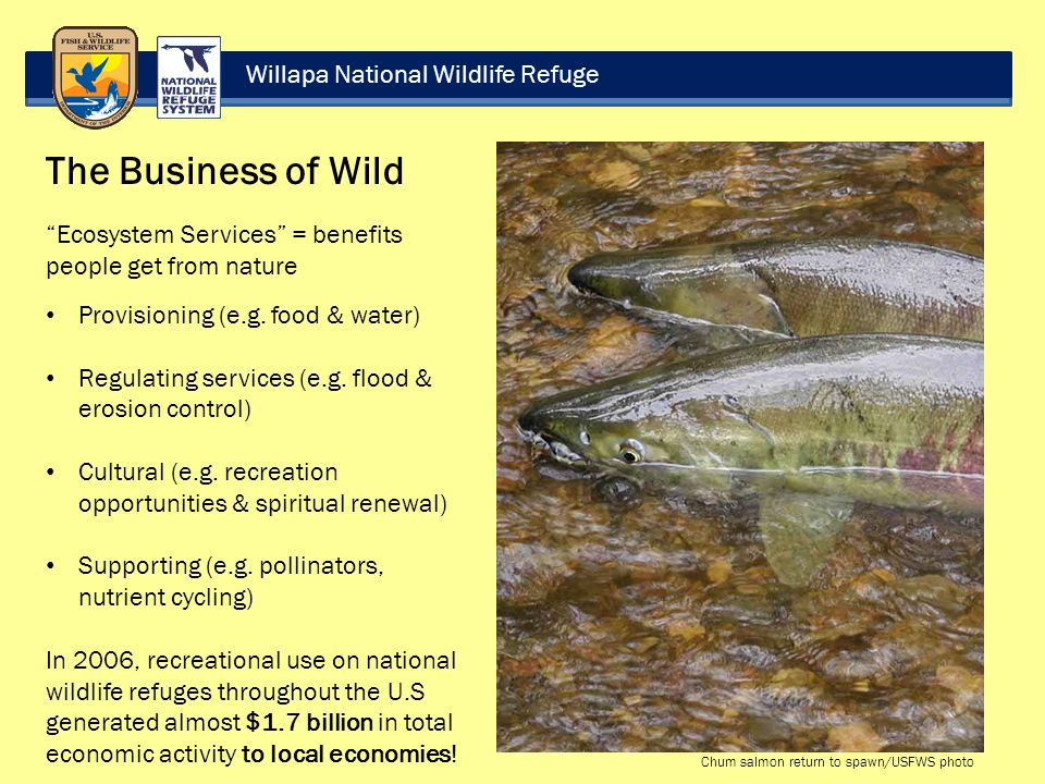 Willapa National Wildlife Refuge The Business of Wild Ecosystem Services = benefits people get from nature Provisioning (e.g.