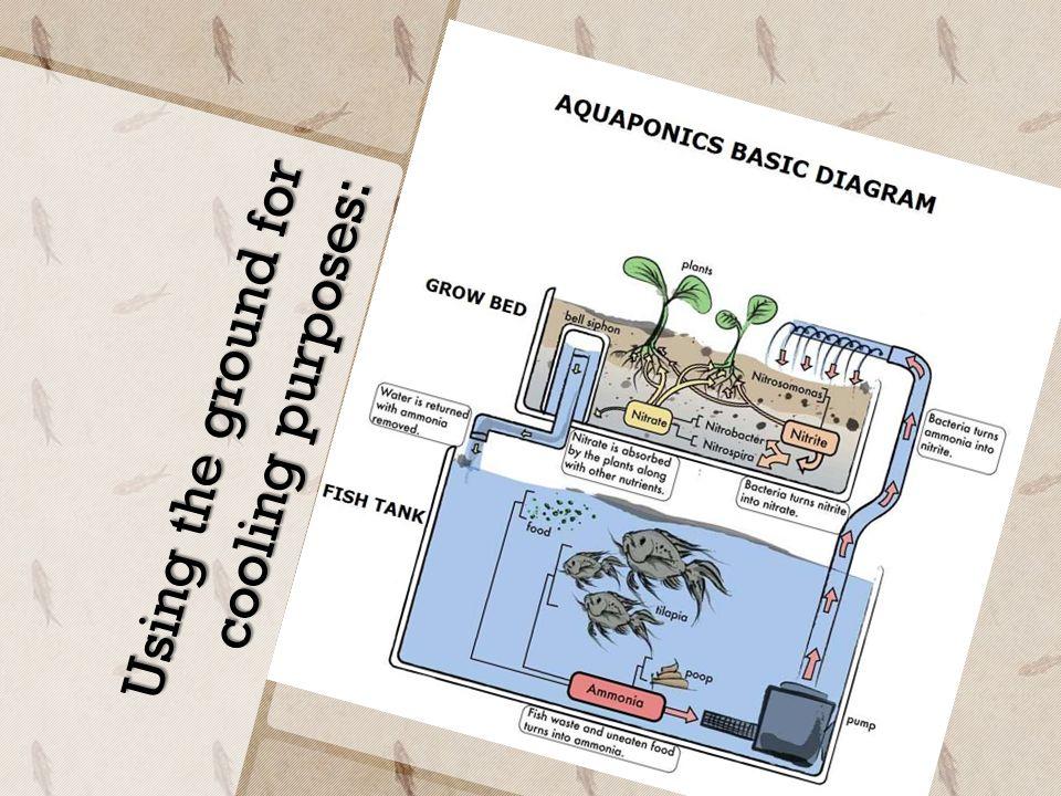Aquaponics C C Growing Your Greens 13min M Watch V Kenge18w