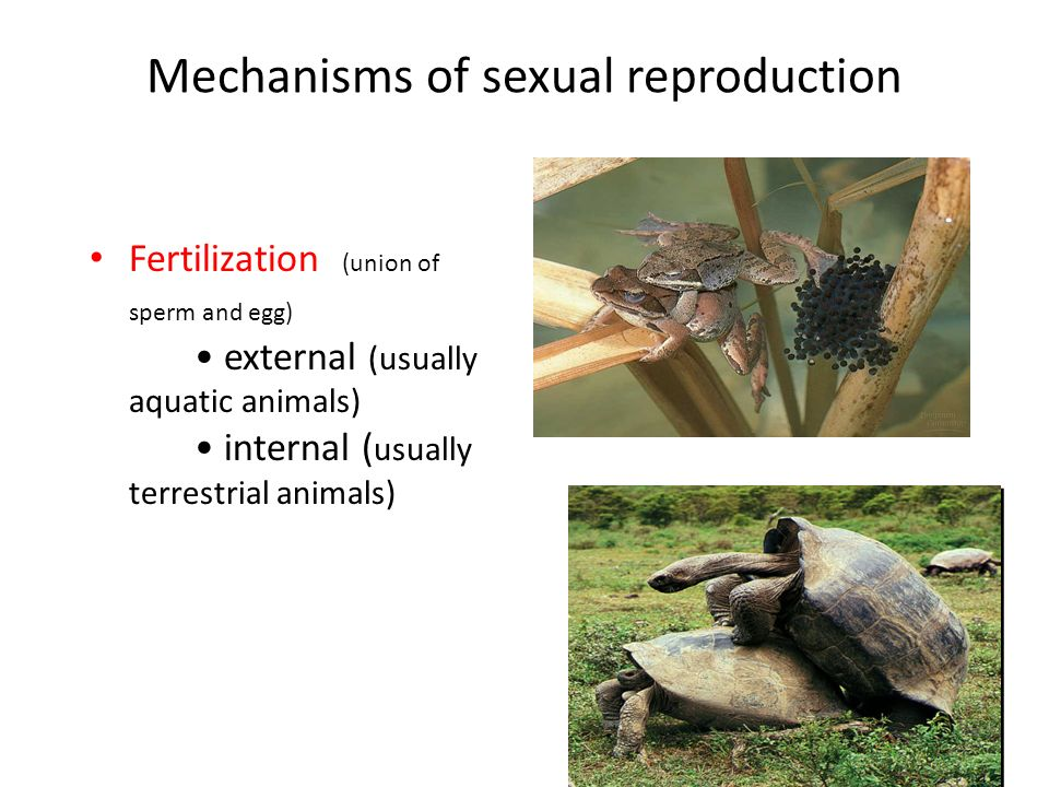 Gemmule formation asexual reproduction regeneration