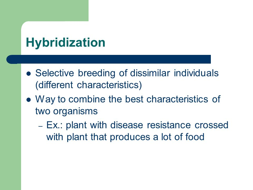 Hybridization Selective breeding of dissimilar individuals (different characteristics) Way to combine the best characteristics of two organisms – Ex.: plant with disease resistance crossed with plant that produces a lot of food