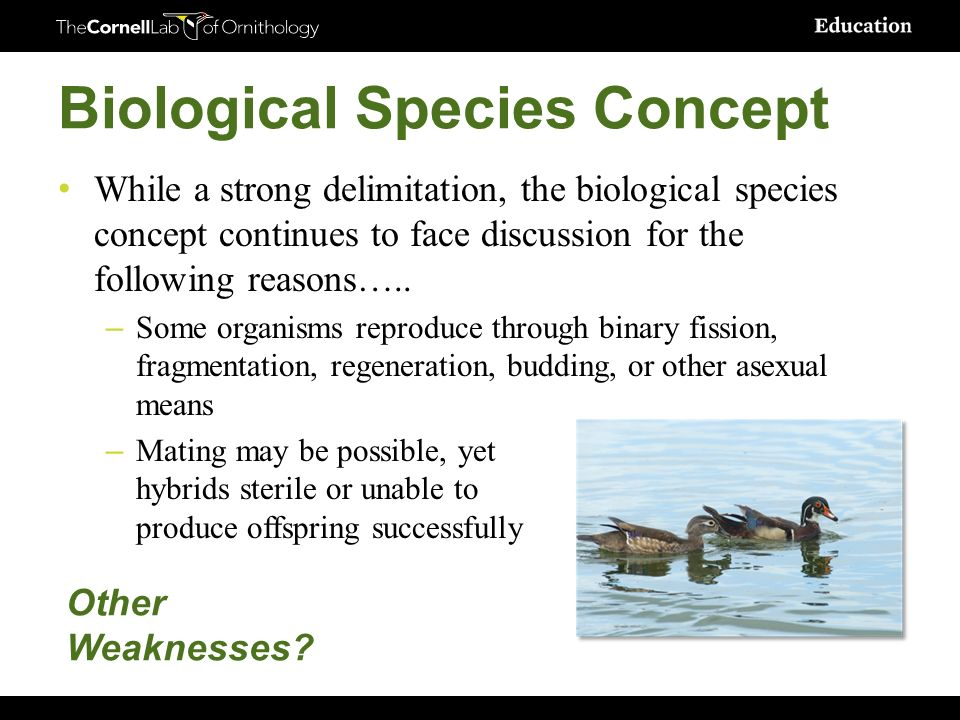 Morphological species concept asexual reproduction regeneration