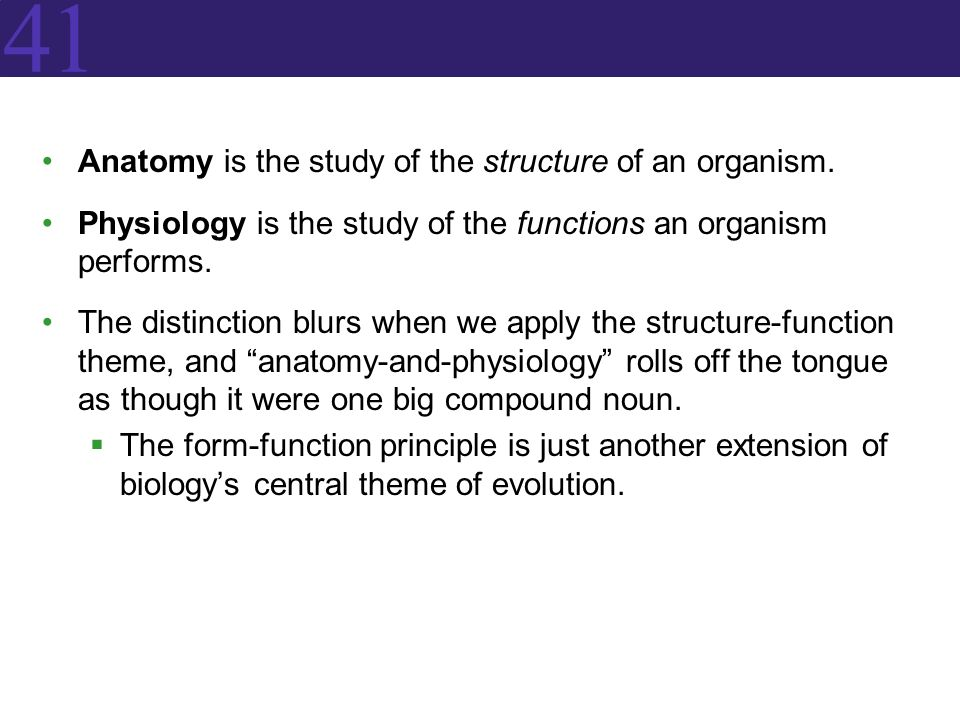41 Anatomy Is The Study Of The Structure Of An Organism Physiology