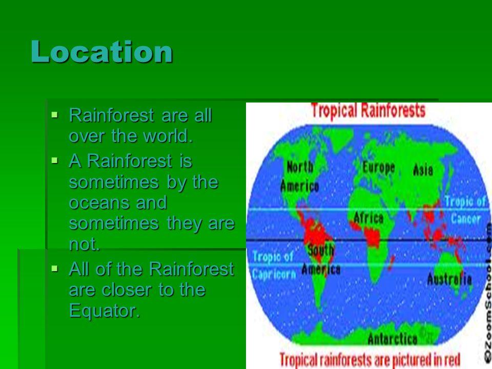 Rainforest By Genevieve Josie Location Rainforest Are