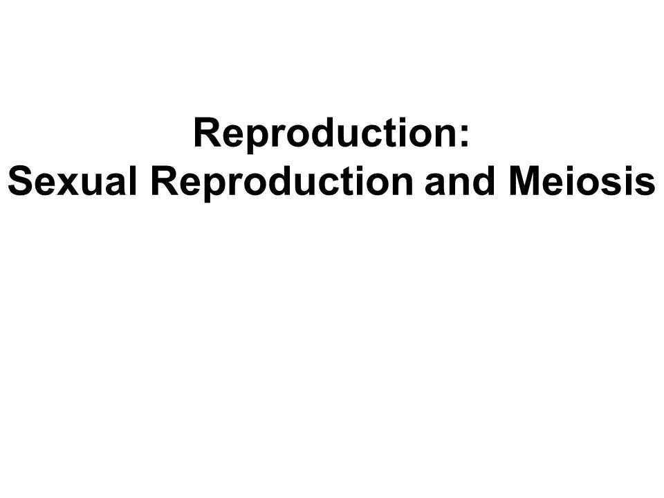 How do asexual and sexual reproduction compare flights