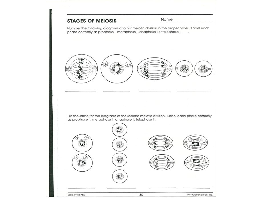 Lesson Overview 114 Meiosis Ppt Download