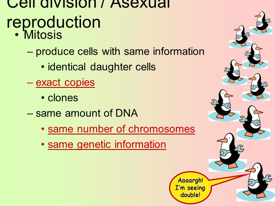 Think im asexual reproduction