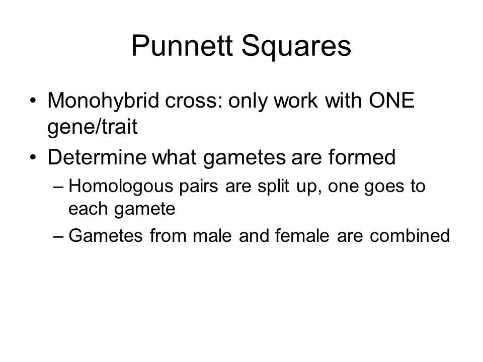 Monohybrid cross: only work with ONE gene/trait Determine what gametes are formed –Homologous pairs are split up, one goes to each gamete –Gametes from male and female are combined Punnett Squares