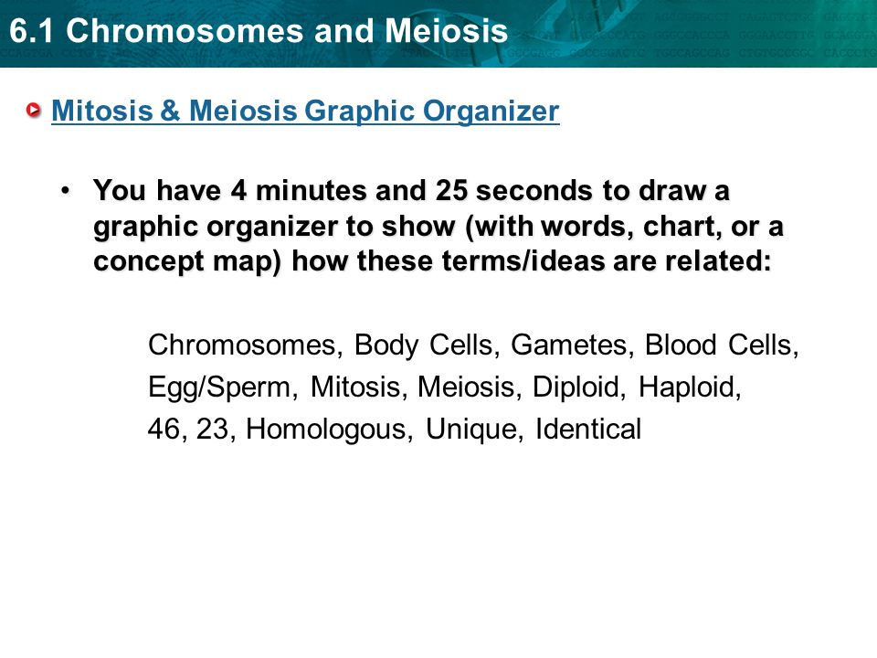 6 1 Chromosomes And Meiosis Section 6 1 Chromosomes And Meiosis