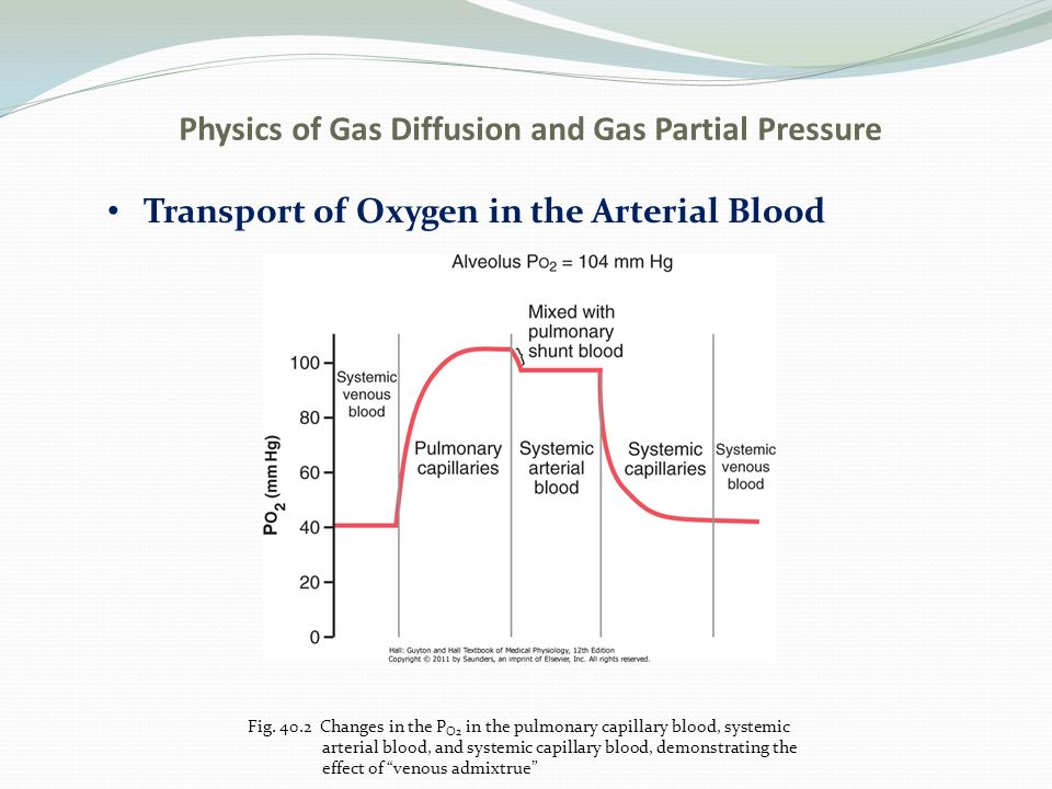 how does carbon monoxide disrupt the process of oxygen transport Oxygen-deficient, carbon dioxide-rich blood returns to the right side of the heart through two large veins, the superior vena cava and the inferior vena cava then the blood is pumped through the pulmonary artery to the lungs, where it picks up oxygen and releases carbon dioxide.
