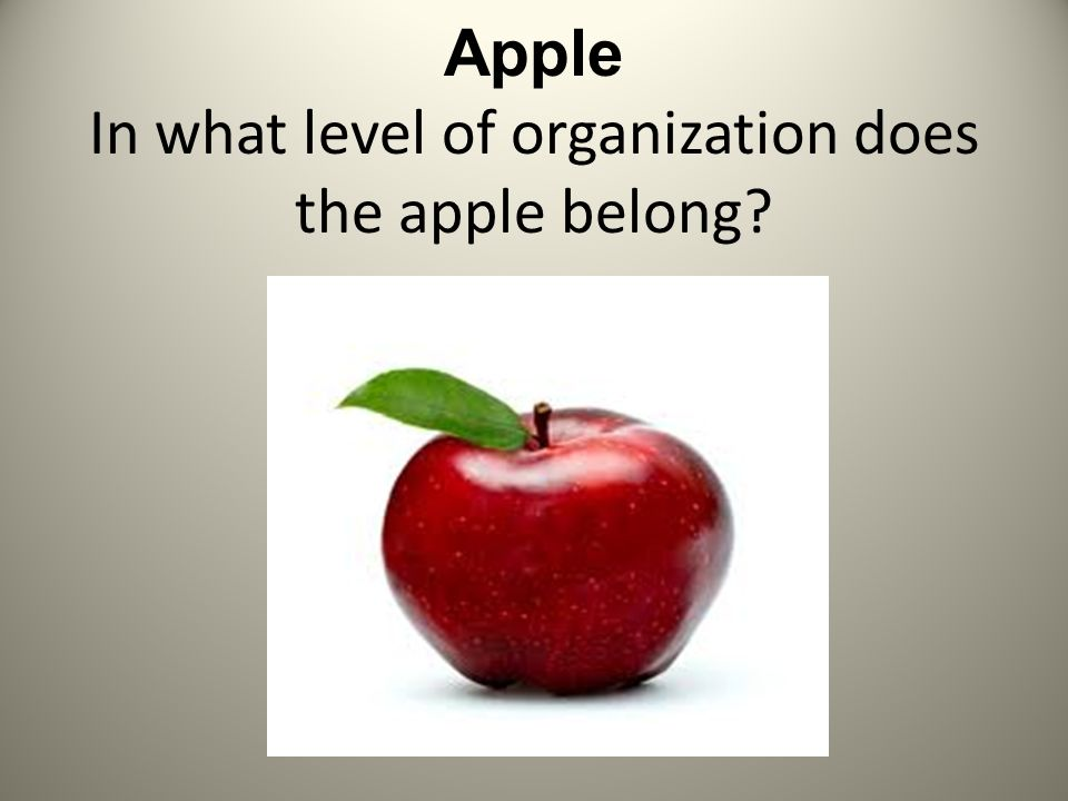 Levels of Organization of Living Things  Apple In what level of
