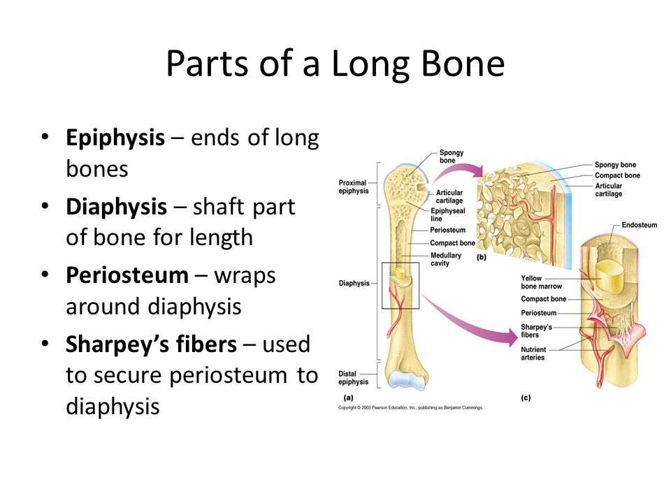 Bones Test Review 5 Functions Of Bones Protection Examples