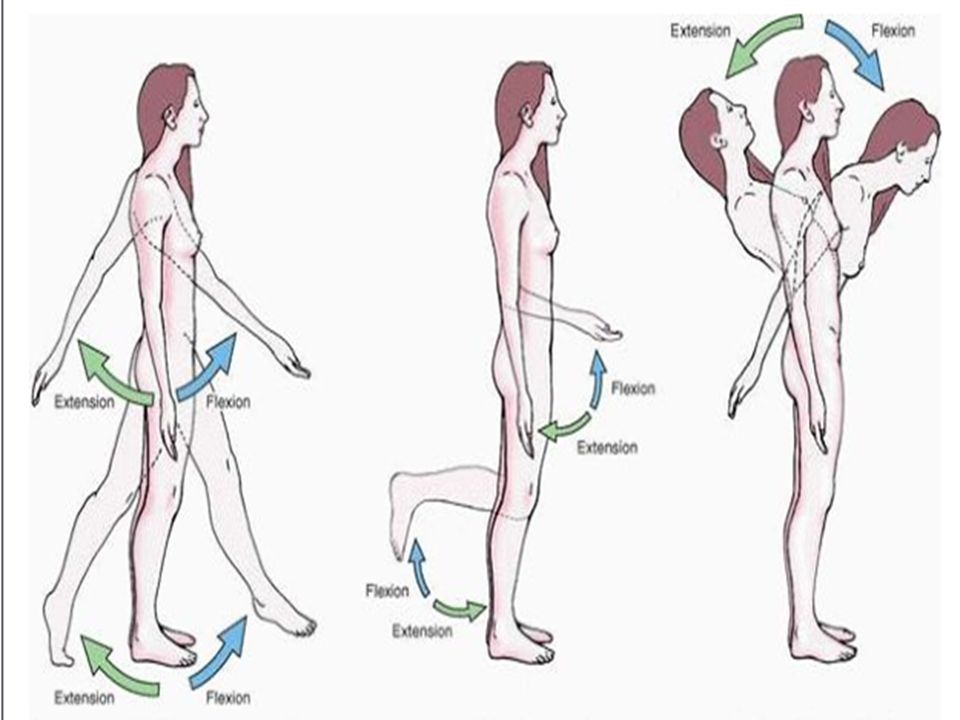 INTRODUCTION TO ANATOMY TERMINOLOGY IN ANATOMY BONES & JOINTS ...