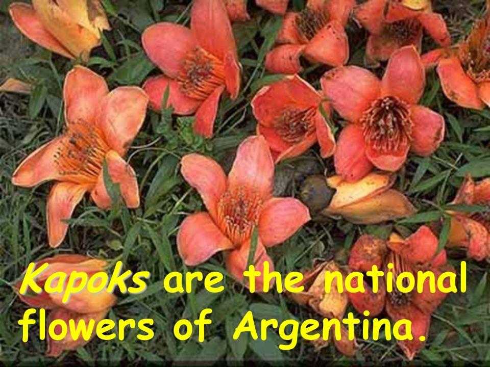 argentina national