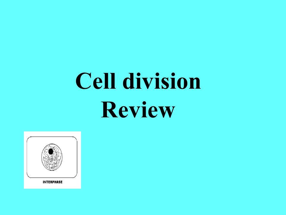 Cell division Review