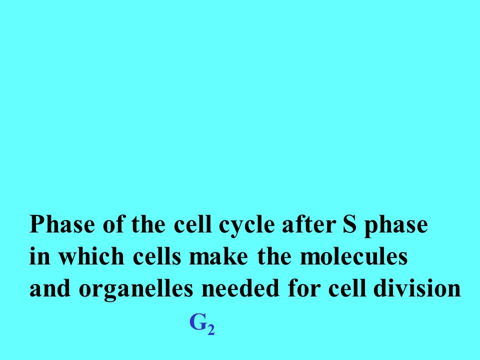 Phase of the cell cycle after S phase in which cells make the molecules and organelles needed for cell division G2G2