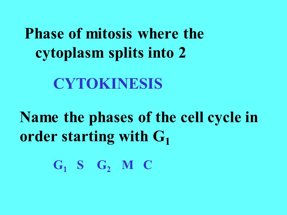 Phase of mitosis where the cytoplasm splits into 2 CYTOKINESIS Name the phases of the cell cycle in order starting with G 1 G 1 S G 2 M C