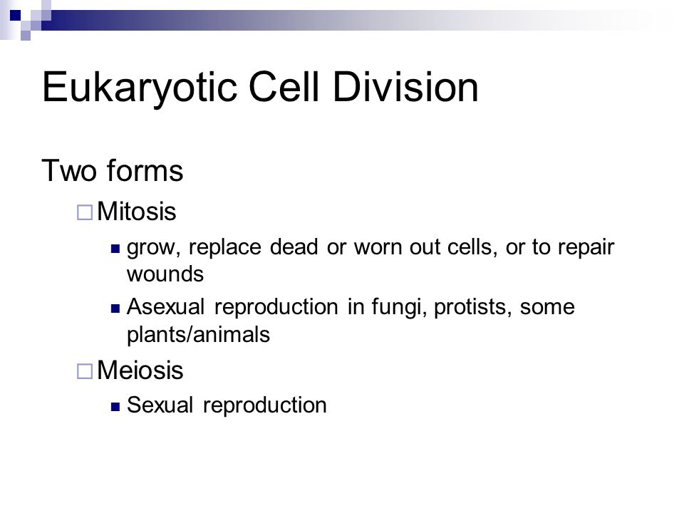 Which protist reproduces asexually by binary fission process