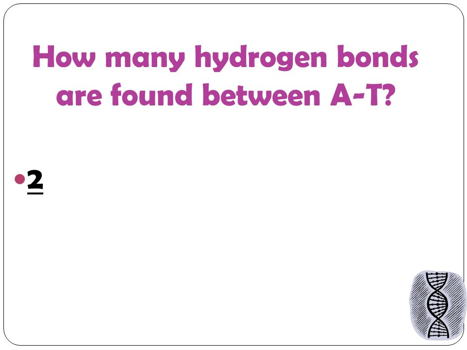 How many hydrogen bonds are found between A-T 2