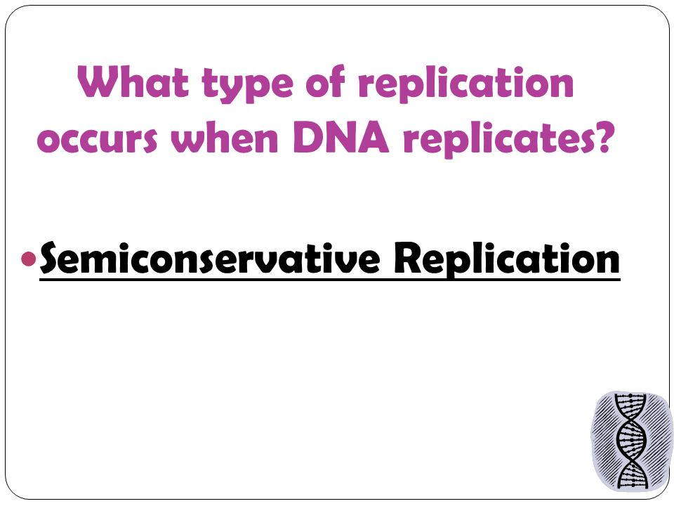 What type of replication occurs when DNA replicates Semiconservative Replication
