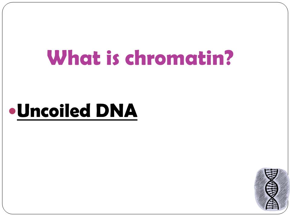 What is chromatin Uncoiled DNA